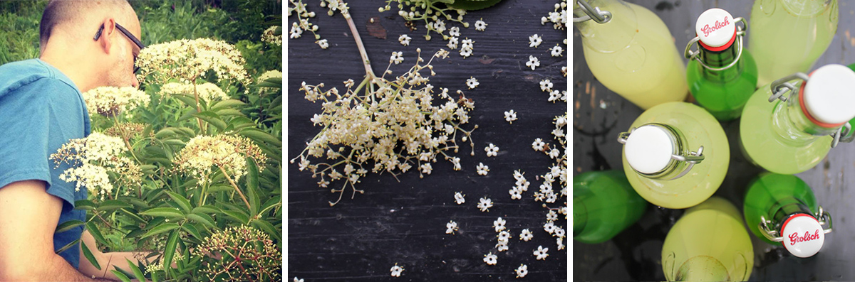picking elderflowers, close up of elderflowers, bottles of elderflower champagne